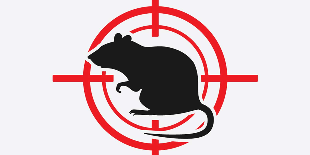 Rodents-Control-1000x500.png